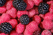 canvas print picture - Ripe and fresh raspberries and blackberry, sweet dark blackberry over red raspberries, berries food