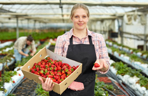 Valokuvatapetti Female farmer with strawberry crop
