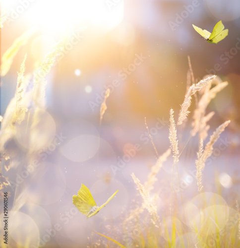 Art autumn sunny landscape; abstract countryside nature background