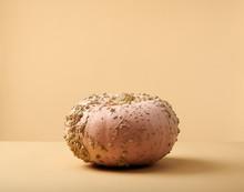 Warty Halloween Pumpkin Gourd ...