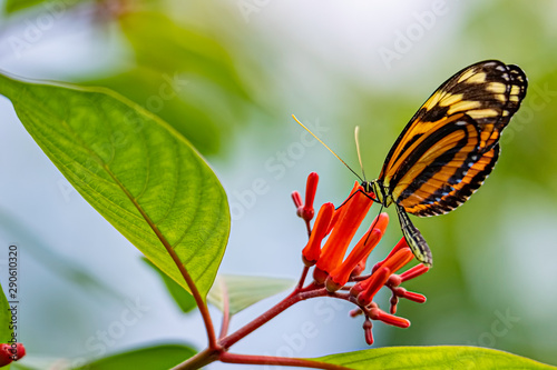 Fotomural  butterfly on a blossom