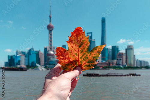 Foto auf Leinwand Shanghai maple yellow leaf on the background of Shanghai city
