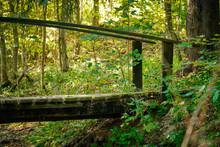 Bridge Over A Stream In The Fo...