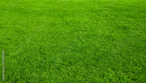 Photo sur Toile Amsterdam green grass background - nature texture