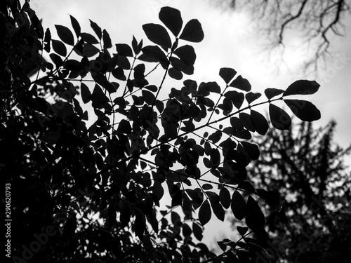 moody leaves against sky in black and white