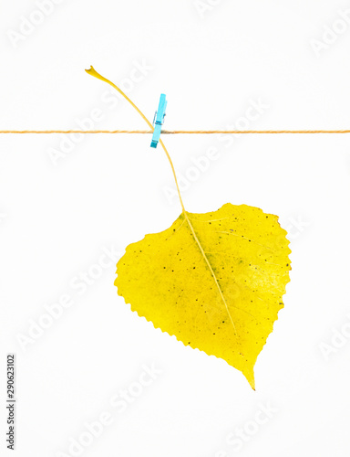 Photo Single yellow Autumn leaf hanging on rope attached with clothes peg