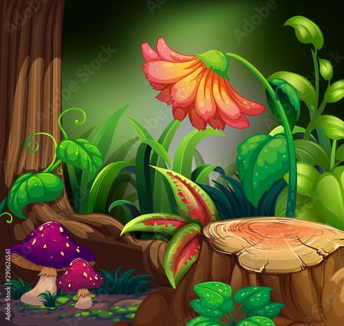 Keuken foto achterwand Kids Nature scene with flower in dark forest
