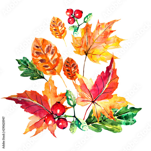 red autumn, autumn leaves , watercoloron a white