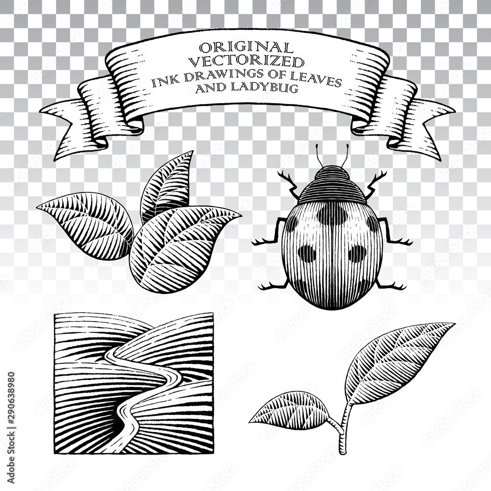 Fototapety, obrazy: Scratchboard Style Ink Drawings of Leaves and Ladybug