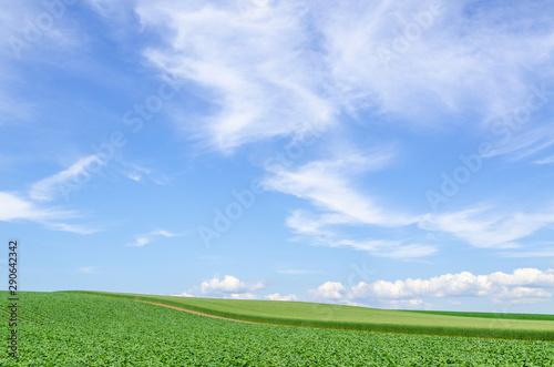北海道 美瑛 青空と穀倉地帯