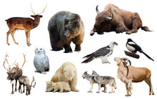 Europe Animals Isolated
