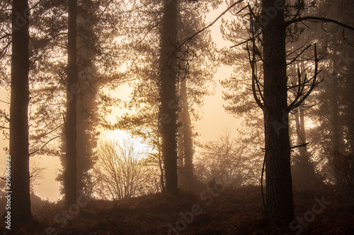 Foto op Plexiglas Cappuccino The sun rises over a foggy morning in a forest filled with red and green vegetation in England, UK.
