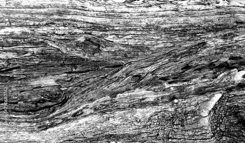 Obraz na plátně  Part of the trunk of an old olive tree with bark covered with a pattern of crack