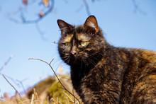 A Tortoiseshell Cat In Staying.
