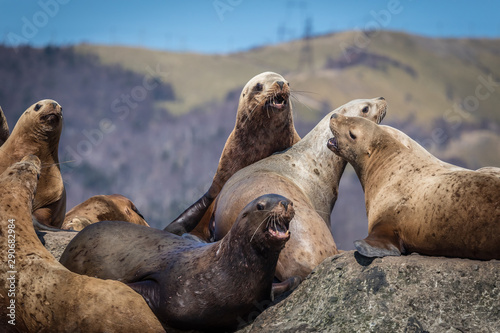 Photo  Sea lions onshore, Sakhalin island, Russia.