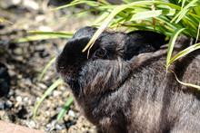 Closeup Brown Rabbit Under Gra...
