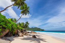 Sunny Beach With Palm And Turquoise Sea In Seychelles. Summer Vacation And Tropical Beach Concept.