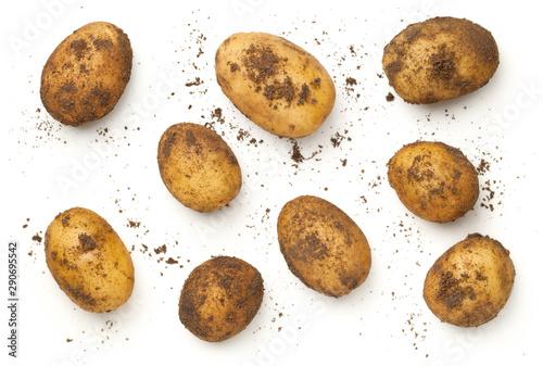 Obraz Fresh Organic Potatoes Isolated On White Background - fototapety do salonu