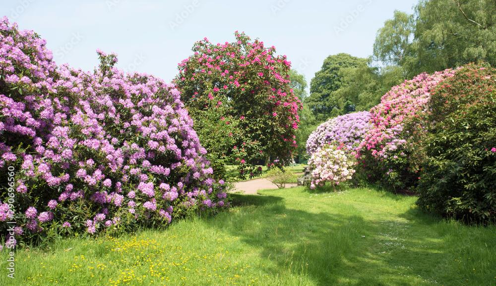Fototapety, obrazy: flowers in the garden
