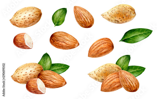 Photo Almond set watercolor isolated on white background