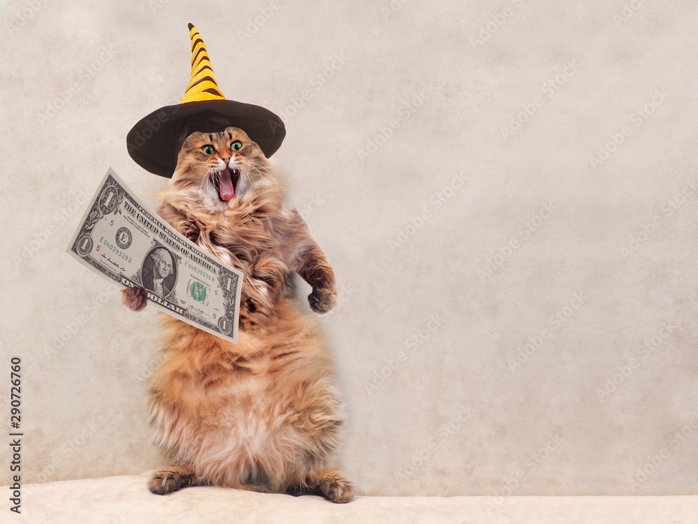 Fototapety, obrazy: The big shaggy cat is very funny standing