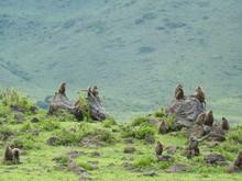 Paysage Tanzanie Avec Des Singes