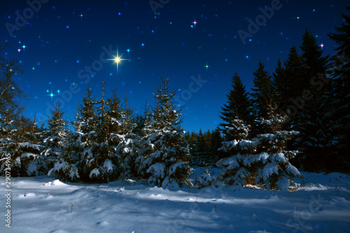 Foto op Canvas Nachtblauw Christmas background with stars and trees in winter forest.