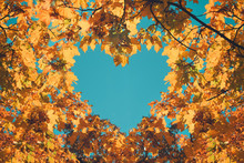 Autumn Fall Love Background. O...