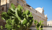 Prickly Pear Cactus And Syracuse Cathedral, Sicily