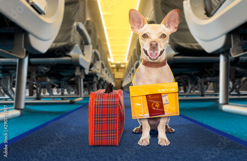 Fotobehang Crazy dog dog as pet in cabin in airplane