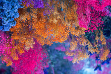 Colorful Dry Flowers At The Roof As A Decoration.Selective Focus Bright Colored Flower Background.