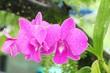 Leinwanddruck Bild - Orchid flower is beautiful in the garden