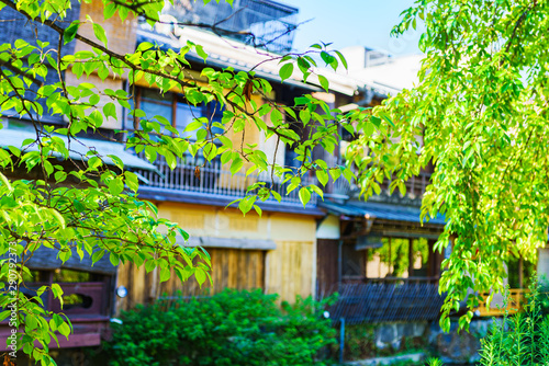Foto auf Leinwand Lime grun 日本イメージ:古都・京都の繁華街の中心の祇園を流れる白川のほとりの風情ある風景-初秋の晴天の祇園白川(公道から撮影)