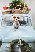 Small And Cute Jack Russell Terrier Dog Sits On The Hood Of Blue Retro Car With Christmas Gifts On The Roof. Classic Retro Car Decorated For Christmas And New Year Holidays