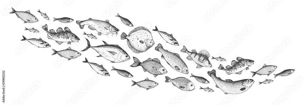 Fototapety, obrazy: Fish sketch collection. Hand drawn vector illustration. School of fish vector illustration. Food menu illustration. Hand drawn fish set. Engraved style. Sea and river fish