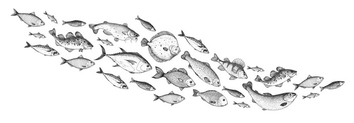 Fish sketch collection. Hand drawn vector illustration. School of fish vector...