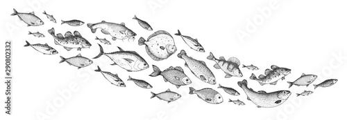 Photo  Fish sketch collection