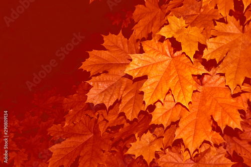 Foto auf AluDibond Ziegel autumn landscape with bright colorful foliage. Indian summer.