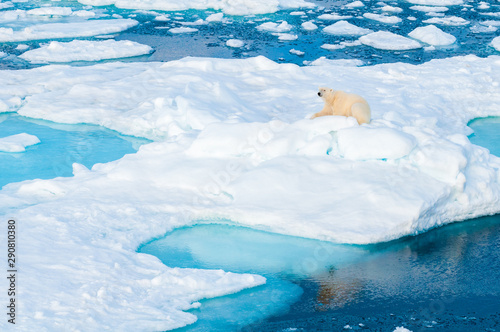 Recess Fitting Polar bear Large polar bear sitting on the ice pack in the Arctic Circle, Barentsoya, Svalbard, Norway