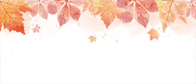 Watercolor Drawing Of Falling Red Leaves In Autumn Season. Aim Used For Wallpaper Background And Web Banner.