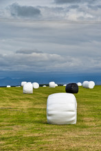 Straw Bales Protected With Bla...