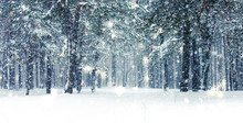 Winter Holiday Background, Nature Scenery With Shiny Snow And Cold Weather In Forest At Christmas Time