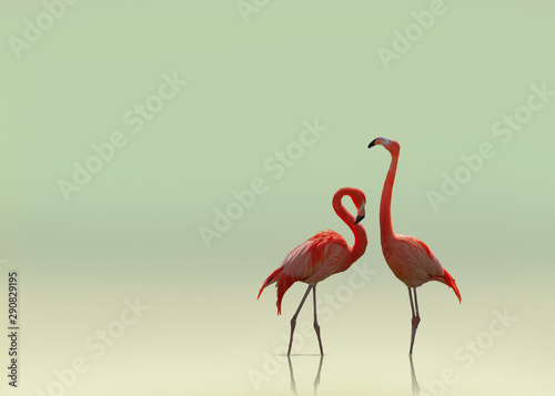 La pose en embrasure Flamingo Flamingo couple on smooth flat background