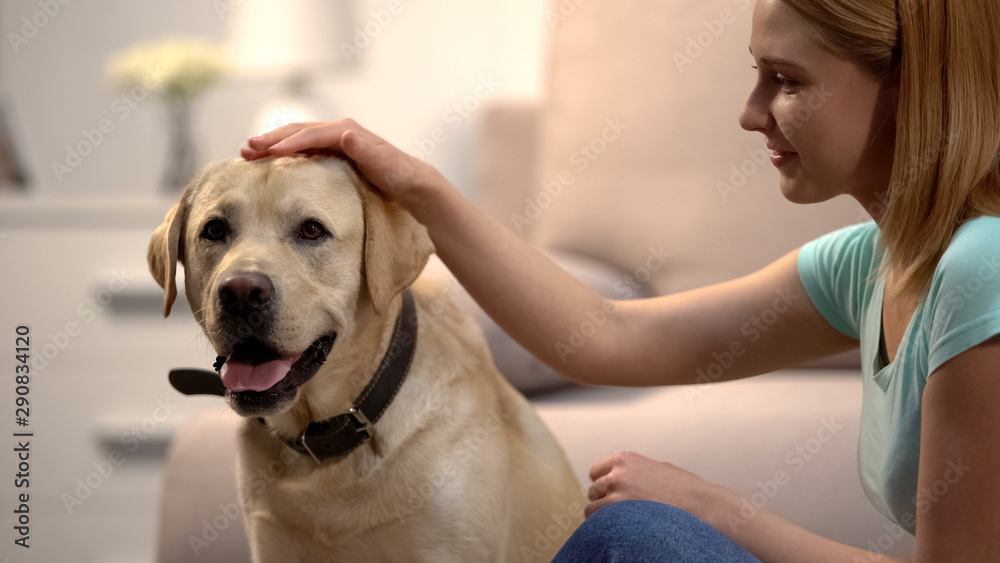 Fototapety, obrazy: Blond woman stroking beautiful labrador retriever dog at home, lovely house pet
