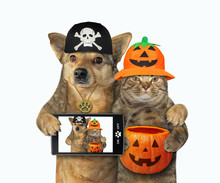 The Dog With A Smart Phone And The Cat With A Pumpkin Bag Made Selfie Together For Halloween. White Background. Isolated.