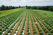 Hemp Farming Field