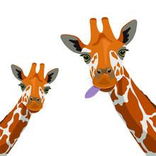 Two Cute Giraffes On A White Background. Wildlife, Zoology, Safari. Flat Design. Vector Illustration.