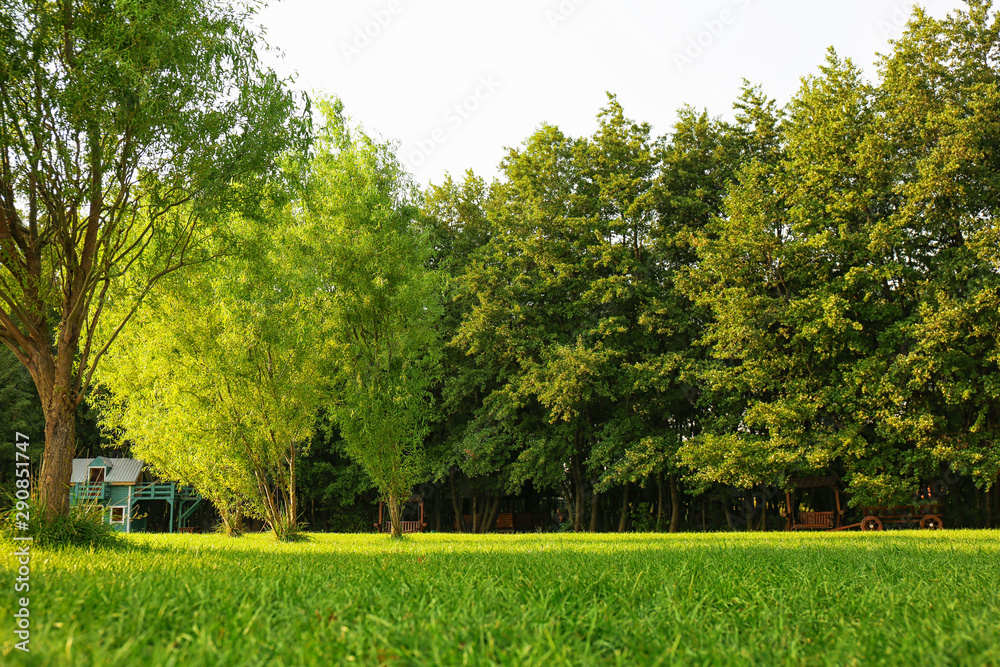 Fototapeta Picturesque landscape with beautiful green lawn on sunny day