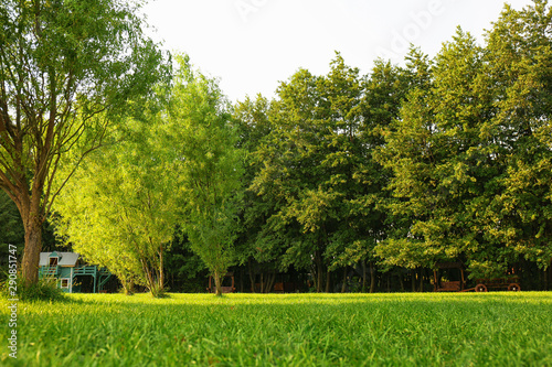 Foto op Canvas Bomen Picturesque landscape with beautiful green lawn on sunny day