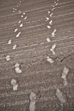 Shoeprints Of Two Persons On R...